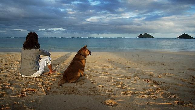 Consejos para pasar con tu perro un gran día de playa