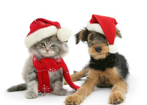 Regalar mascotas en Navidad puede no ser una buena idea
