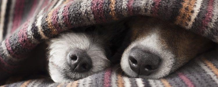 Cómo saber si tu perro tiene frío y cómo protegerlo
