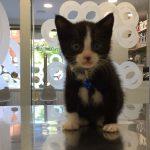 OREO, gatito de Gonzalo