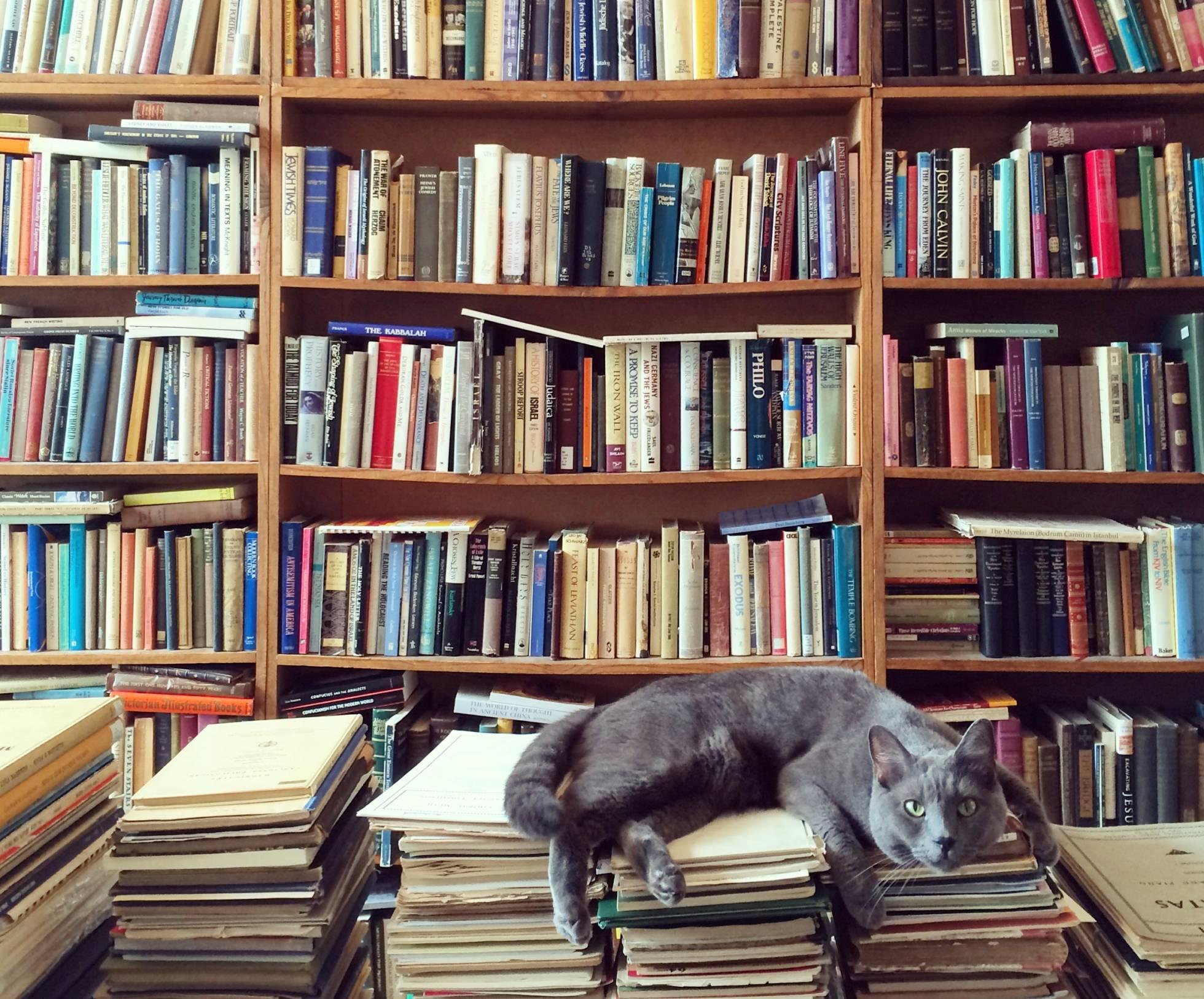 Cinco libros para gatos