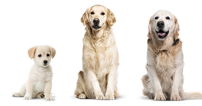 ¿Cuantos años humanos tiene tu perro?
