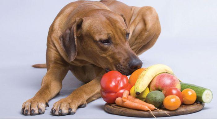 ¿Es bueno dar de comer frutas y verduras a nuestro perro?