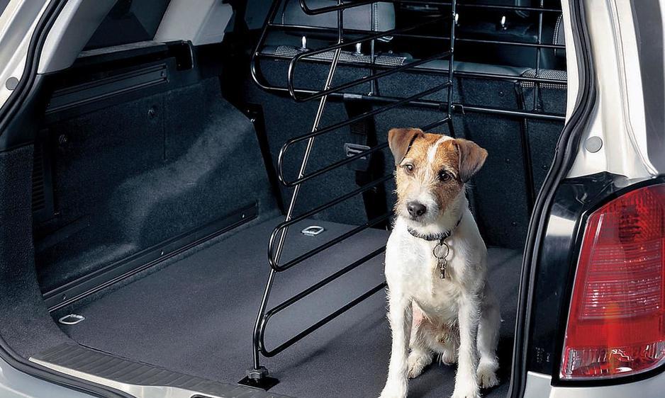 Evita que tu mascota sufra mareos en el coche